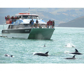 Akaroa Harbour Nature Cruises